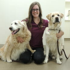 Two Dog's on either side of veterinary employee