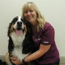 Veterinarian holding a black and white long haired dog