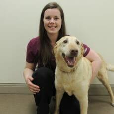 Veterinarian holding onto large beige dog