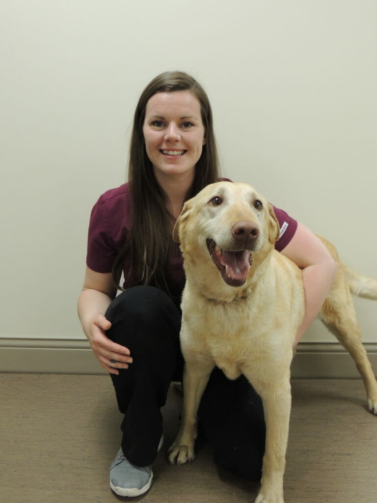 Registered veterinary technician holding onto large beige dog