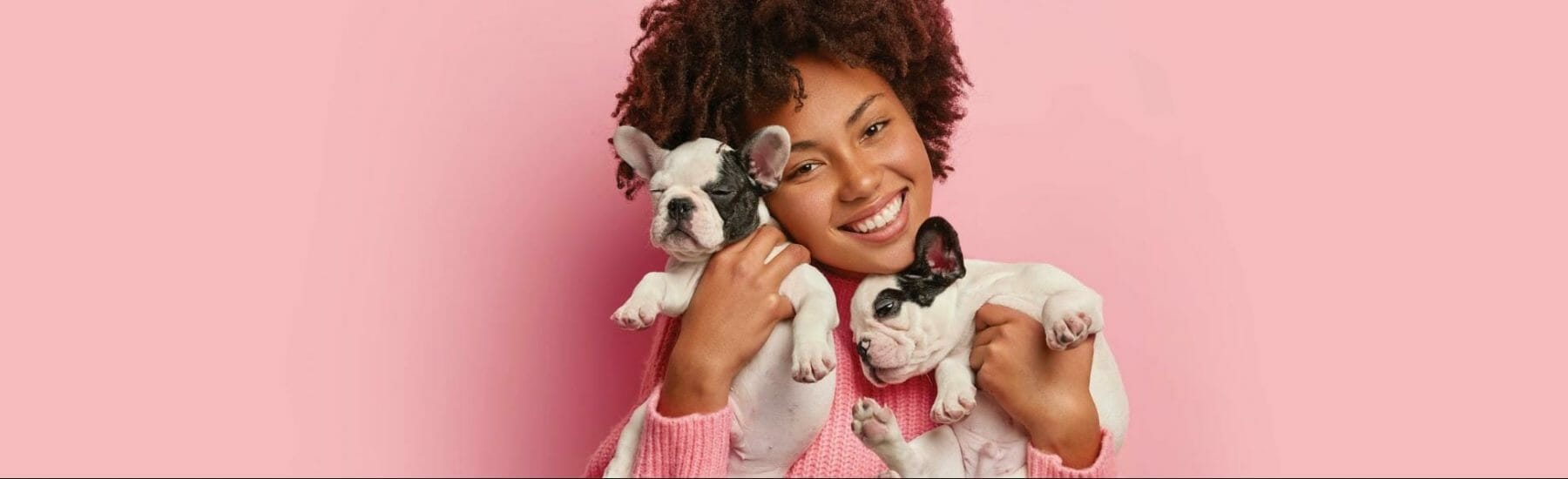 Female holding two small boxer puppies with a pink background