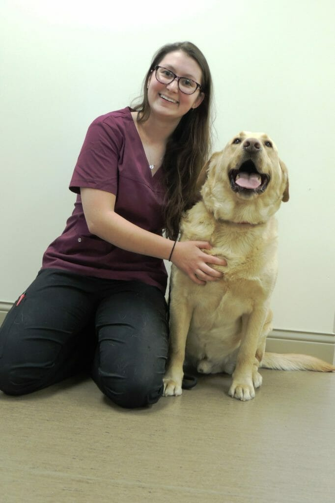 Registered veterinary technician holding onto large beige dog
