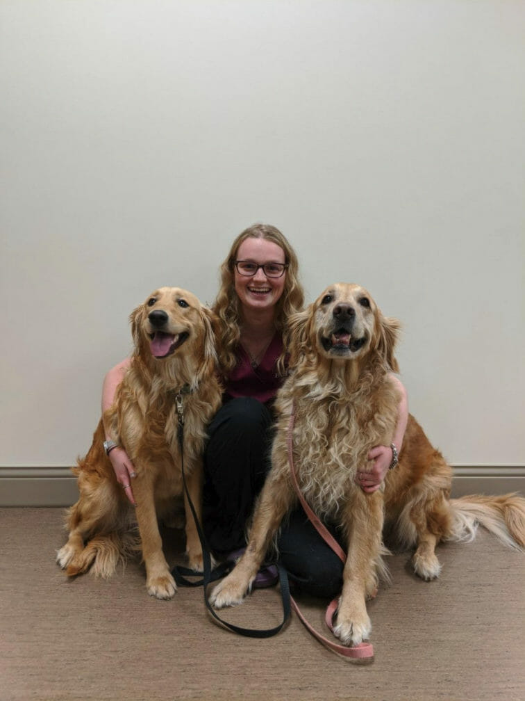 Veterinarian surrounded by two large golden long hair dogs