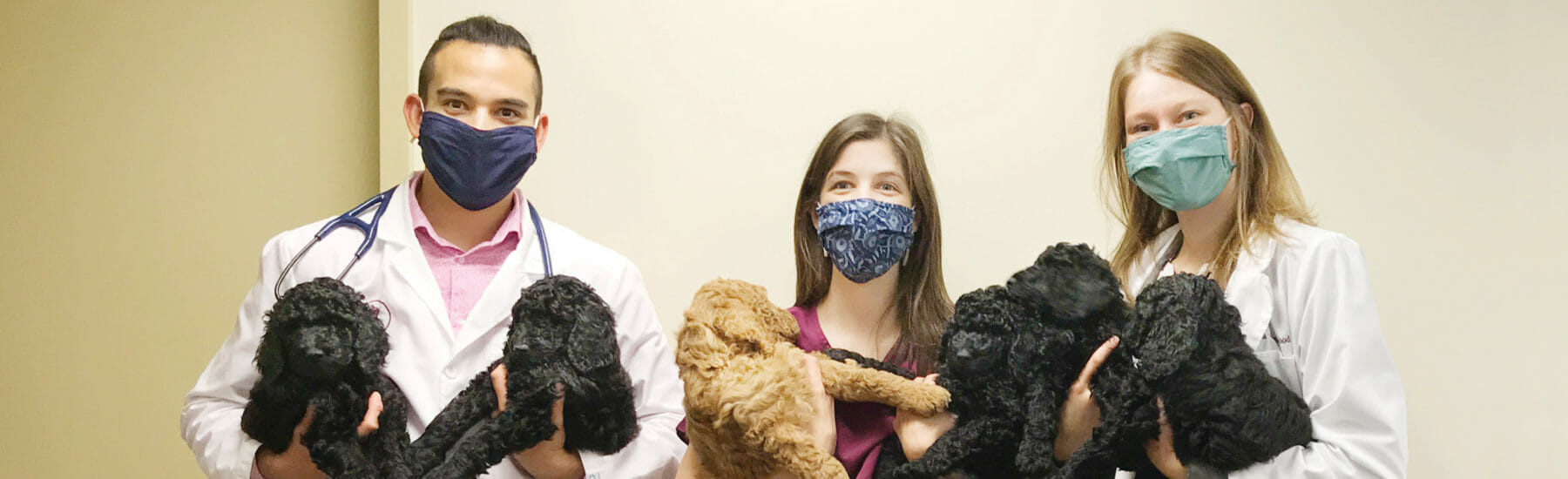 Three veterinary employees holding two dogs each