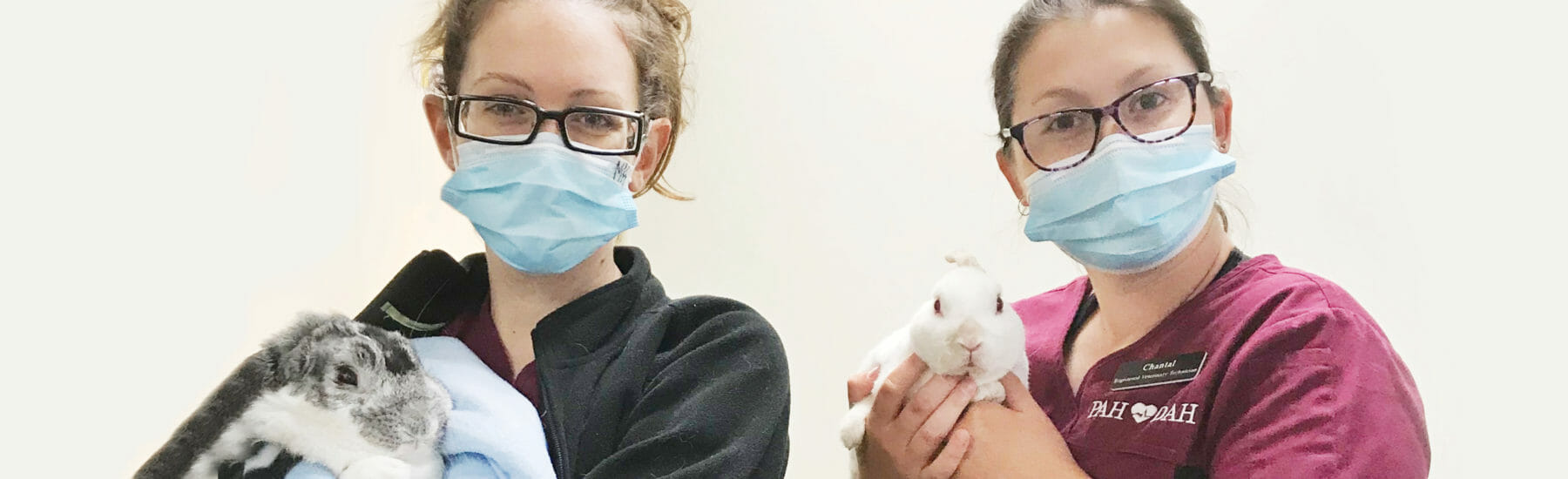 Two veterinarian employees holding rabbits